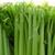 DAB Celery