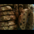 Biscotti, Cranberry Almond